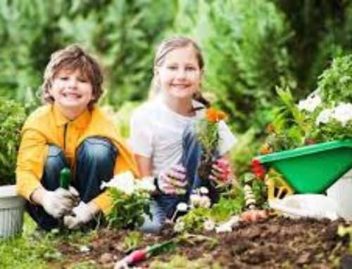 5 Tips To Get Your Children Outside